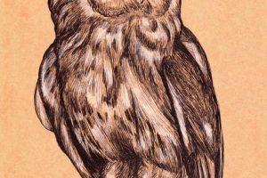 owl white (web)