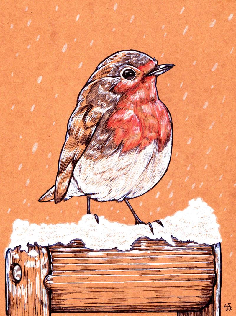 robin (web)